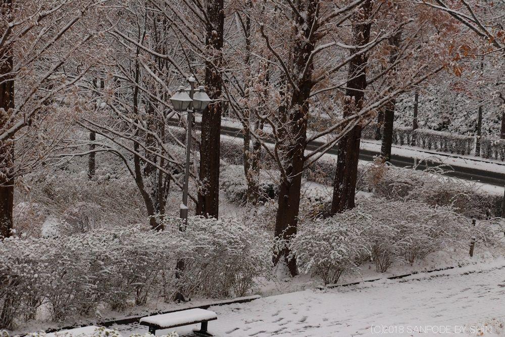 仙台での初雪の景色