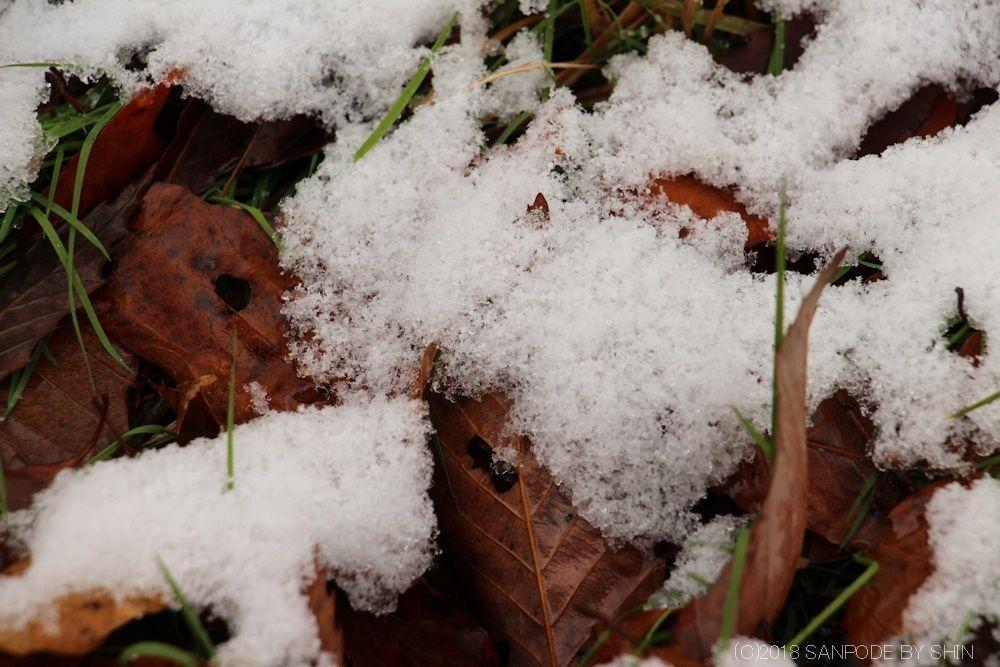 雪をかぶった公園の落ち葉