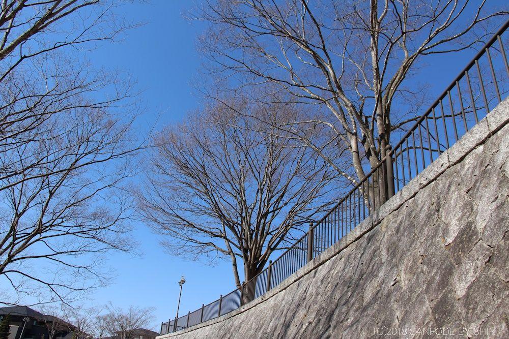 北側広場の石垣とケヤキ