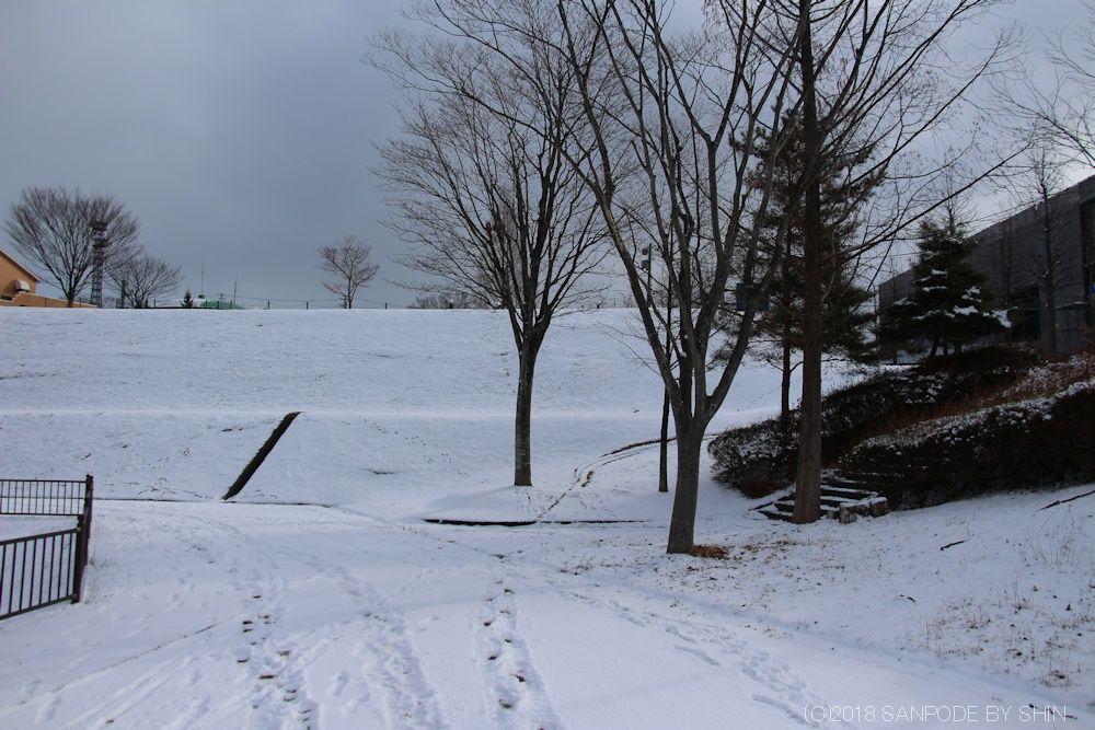 桂島緑地の冬景色