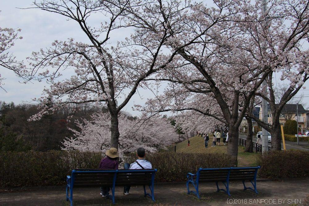 大倉緑地入口の桜とベンチ