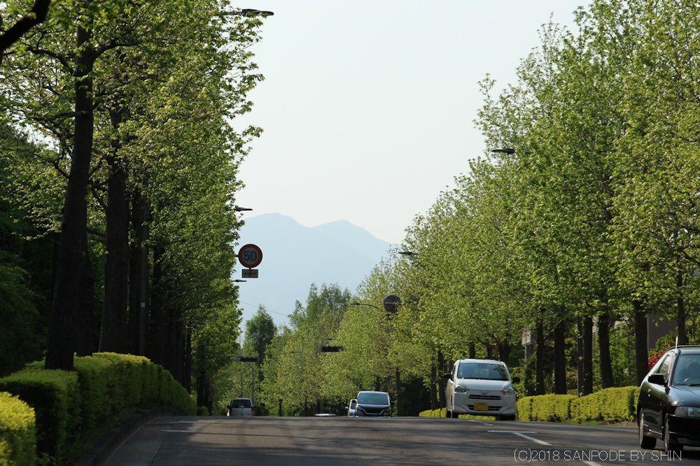 新緑の街路樹