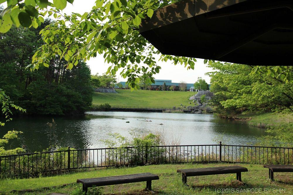 ベンチから池を望む