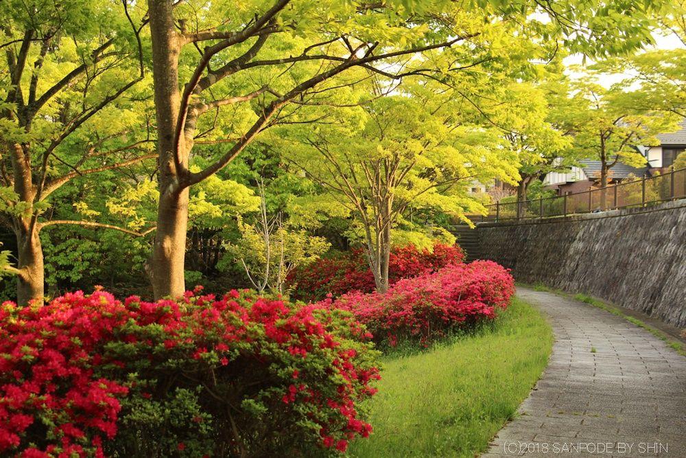 散歩道のツツジと木々