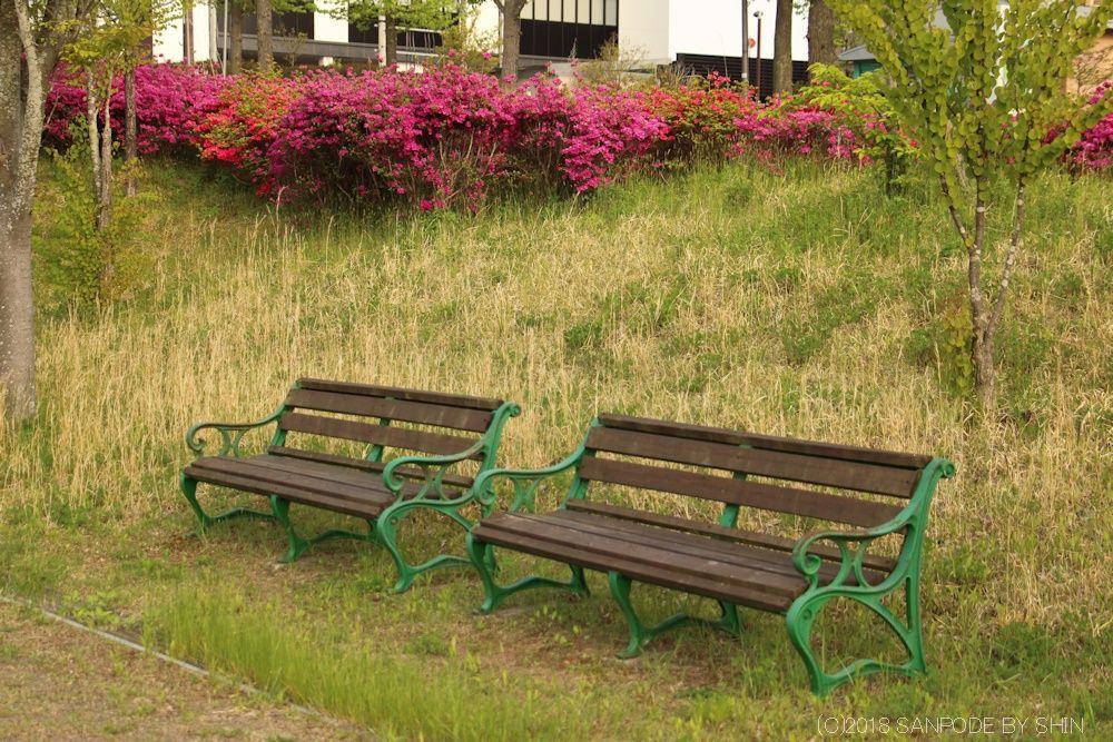 散歩道のツツジとベンチ