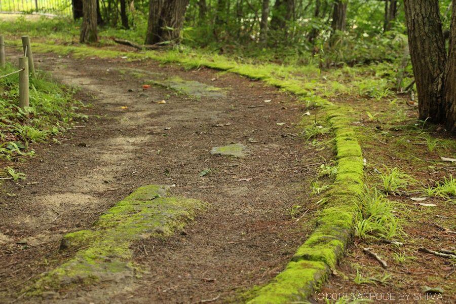 遊歩道の縁石に生えている苔