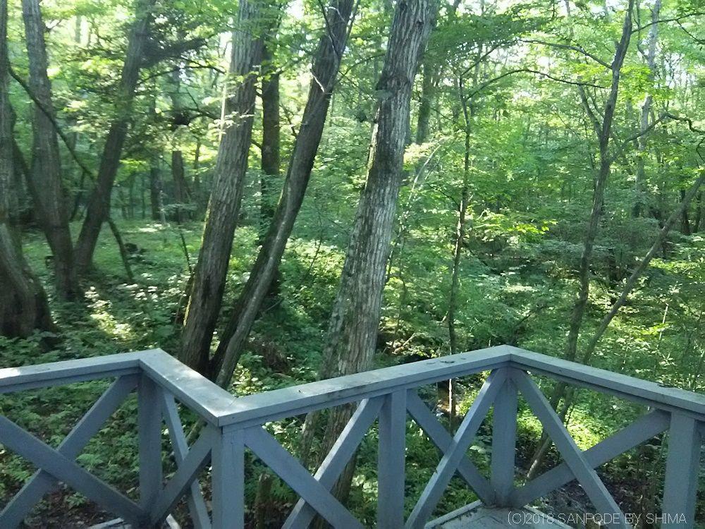 店のテラスから林を見る