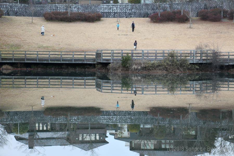 桂島緑地の水面に映る景色