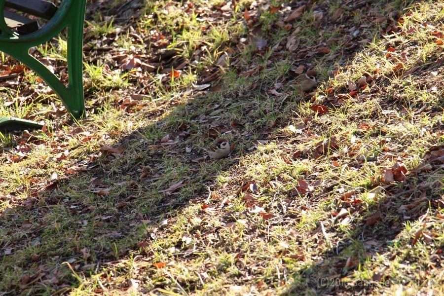 長く伸びた木の陰に雀