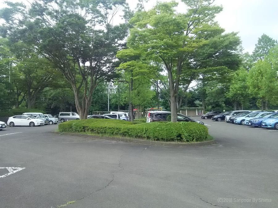 樹木に囲まれた駐車場