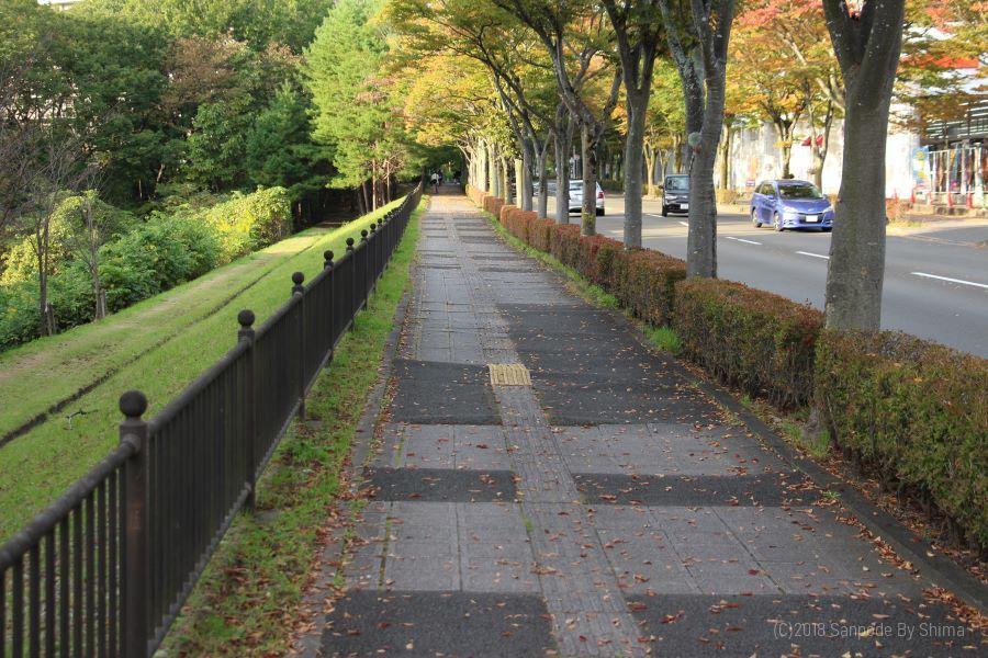 秋の並木道(歩道)